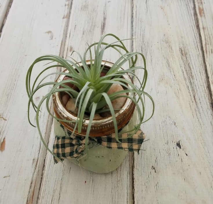 how to make a rustic air plant planter